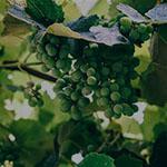 Vinicultura index la Vid hover