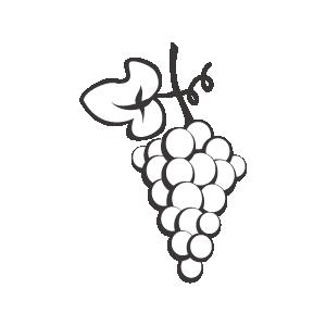 Vinicultura vinos_Variedades