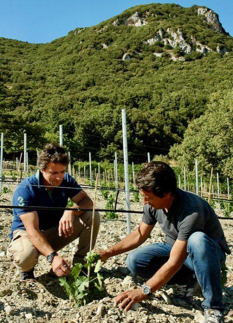 Fig. 5. Los hermanos Klaus y Günther Di Giovanna, en el viñedo de la uva Grillo en las laderas del Monte Genaurdo, Montañas Sicanas. Sambuca de Sicilia. Foto: Azienda Agricola Biologica Di Giovanna.